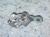 Ducati Kickstand Side Stand Bracket: 848/1098, S4RS, SC